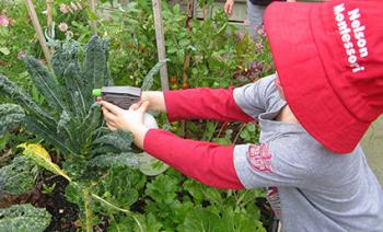 Bays Montessori The-Outdoor-Programme